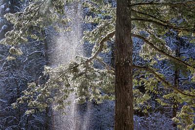 Photograph - Shedding Snow by Belinda Greb