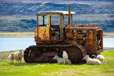 Photograph - Sheep And Old Vehicle In Rural Iceland by Matthias Hauser