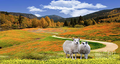 Photograph - Sheep And Road Ver 3 by Larry Mulvehill