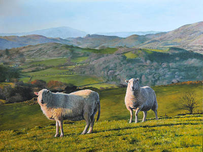 Sheep At Rhug Art Print by Harry Robertson