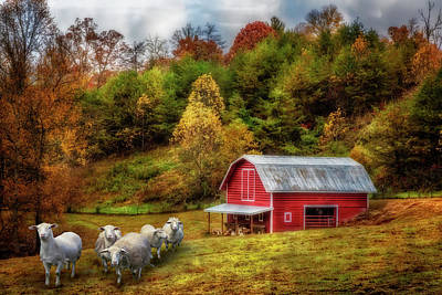 Photograph - Sheep At The Red Barn In Autumn by Debra and Dave Vanderlaan