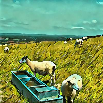 Photograph - Sheep At The Water Trough by Dorothy Berry-Lound
