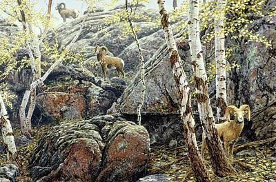 Painting - Sheep Bighorns by Brian Durfee