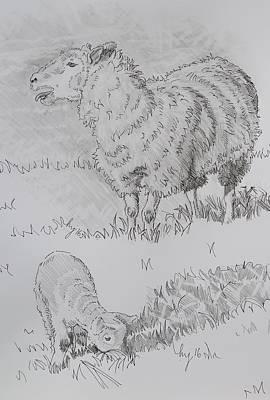 Drawing - Sheep Bleating And Lamb Pencil Drawing - Baa Baa Blah by Mike Jory