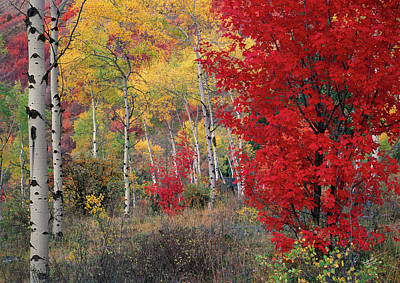 Fall Colors Photograph - Sheep Canyon In Autumn by Leland D Howard