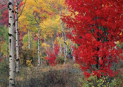 Sheep Canyon In Autumn Art Print by Leland D Howard