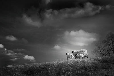 Sheep Photograph - Sheep Clouds by Dorit Fuhg