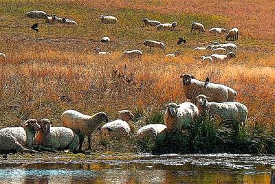 Photograph - Sheep Country by Deborah Moen