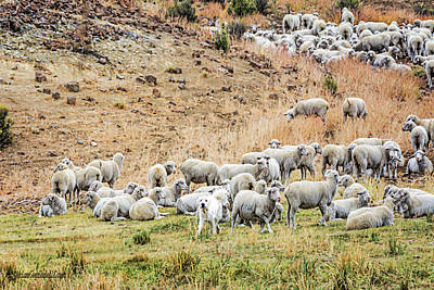 Sheep Dog And Flock  Art Print by LeeAnn McLaneGoetz McLaneGoetzStudioLLCcom