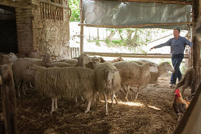 Photograph - Sheep Farm by Kathleen McGinley