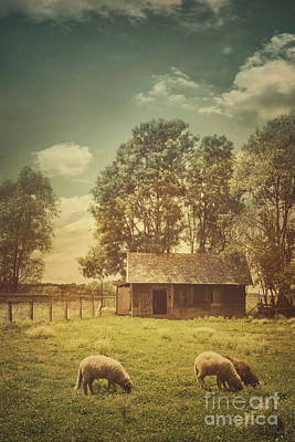 Country Cottage Photograph - Sheep Farm by Mythja Photography