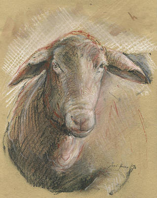 Farm Animal Painting - Sheep Head by Juan Bosco