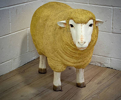 Photograph - Sheep In The Corner by Jean Noren