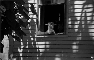 Photograph - Sheep In The Shadows by Wayne King