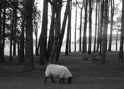 Photograph - Grazing In The Woods by Jenny Regan