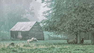 Photograph - Sheep. Jericho, Vermont by George Robinson