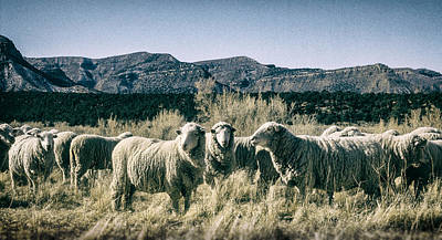 Photograph - Sheep Near Mesa Verde National Park Montezuma County, Colorado by John Brink