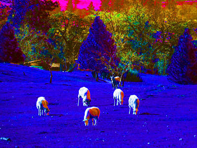 Photograph - Sheep Of A Different Color by Jacqueline  DiAnne Wasson