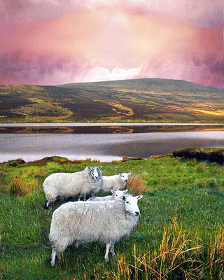 Digital Art - Sheep Of Donegal by Vicki Lea Eggen