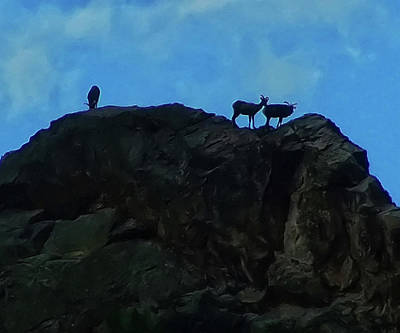 Digital Art - Sheep On A Mountaintop by Chris Flees