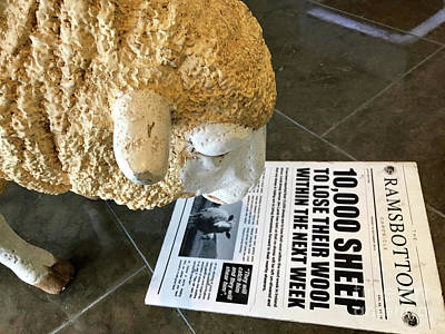 Photograph - Sheep Reading The Newspaper Headlines by Vizual Studio
