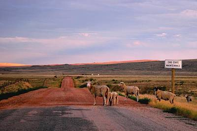 Photograph - Sheep Road by Matt Harang