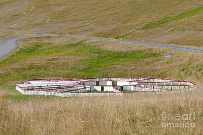 Photograph - Sheep Sorting Corral, Iceland by Catherine Sherman