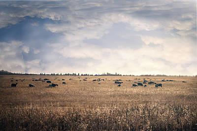 Sheep Sunset Art Print
