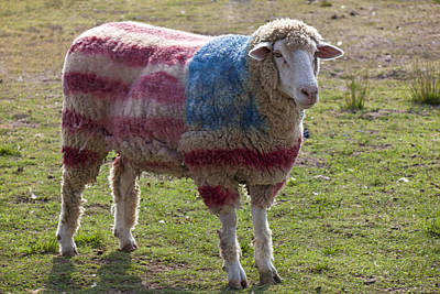 Sheep With American Flag Print by Garry Gay