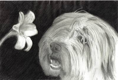 Lillies Drawing - Sheepdog Lilly Sniffer by Joshua Hullender