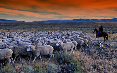 Herding Dog Photograph - Sheepherder Life by Movie Poster Prints