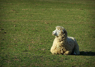 Photograph - Sheepish Smiles by Linda Mishler