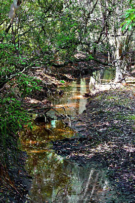 Photograph - Sheepwash Creek by Miroslava Jurcik