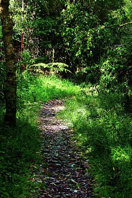 Photograph - Sheepwash Creek Walking Track by Miroslava Jurcik