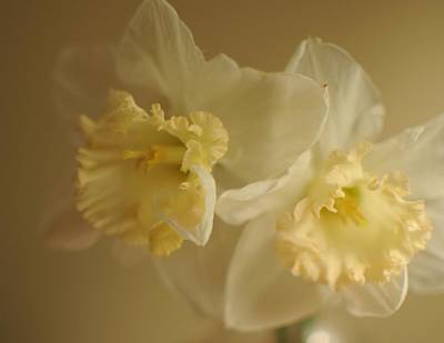 Sheer Daffodils Art Print by Beverly Cazzell