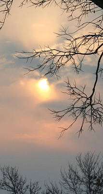 Photograph - Sheer Sunlight by Julie Lueders
