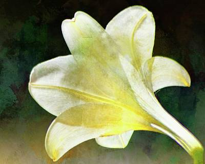 Photograph - Sheer White Lily On Teal by Sheri McLeroy
