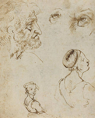 Drawing - Sheet Of Studies  by Leonardo da Vinci