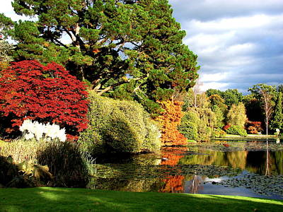 Photograph - Sheffield Park by Nicola Butt