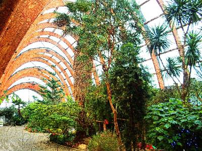 Photograph - Sheffield Winter Gardens 2 by Dorothy Berry-Lound
