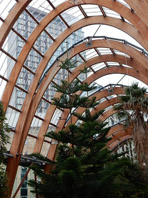 Photograph - Sheffield Winter Gardens 4 by Dorothy Berry-Lound