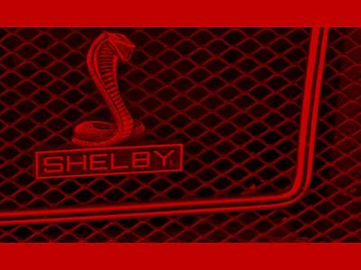 Cobra Mixed Media - Shelby by Elizabeth Celio