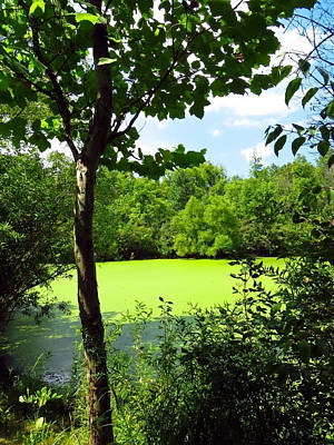 Photograph - Sheldon Marsh Algae Pond by Shawna Rowe