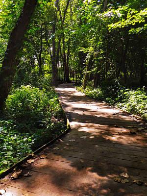 Sheldon Marsh Nature Walk Art Print by Shawna Rowe