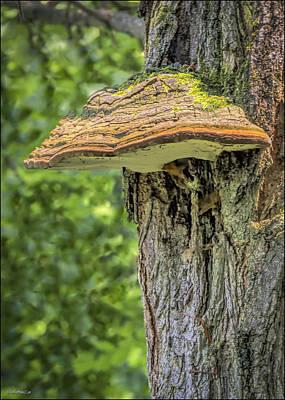 Photograph - Shelf Fungus by LeeAnn McLaneGoetz McLaneGoetzStudioLLCcom