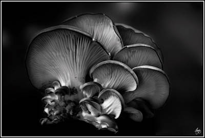 Photograph - Shelf Fungus Monochrome by Wayne King