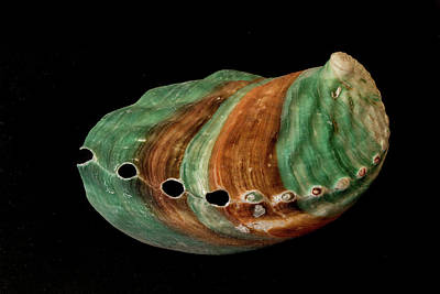 Photograph - Green And Brown Shell by Richard Goldman