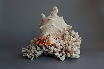 Photograph - Shell And Coral by Guillermo Rodriguez
