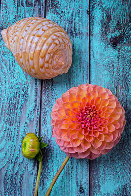 Shell And Pink Dahlia Art Print by Garry Gay