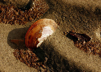 Photograph - Shell And Sand by Barbara  White